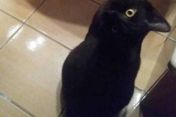 Оптическая иллюзия: ворон или кот?