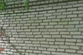Гнездо в стене