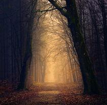 Тест-гадание: Выбери свой таинственный лес и получи предсказание на ближайшие 3 месяца