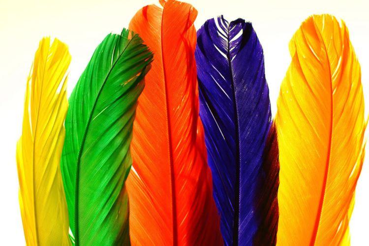 Тест: Выберите перо и узнайте своё предназначение в жизни