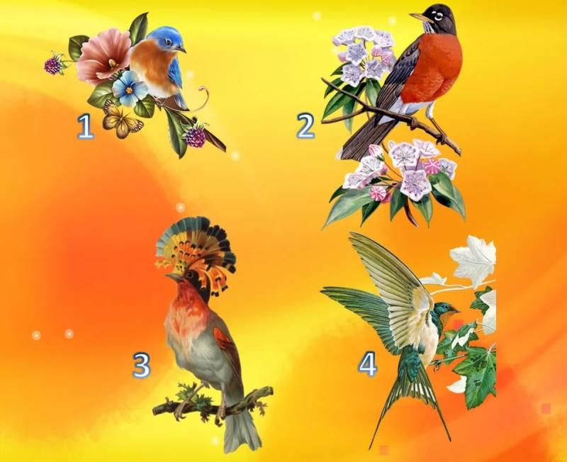 Тест: Выберите птицу и узнаете, что приготовило будущее