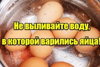 Не выливайте воду, в которой варились яйца!