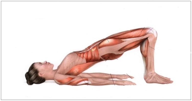 Все мышцы работают, благодаря трём упражнениям