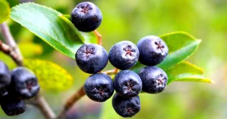 Самые полезные ягоды мире, которые «убивают» раковые клетки, вирусы и замедляют процесс старения!