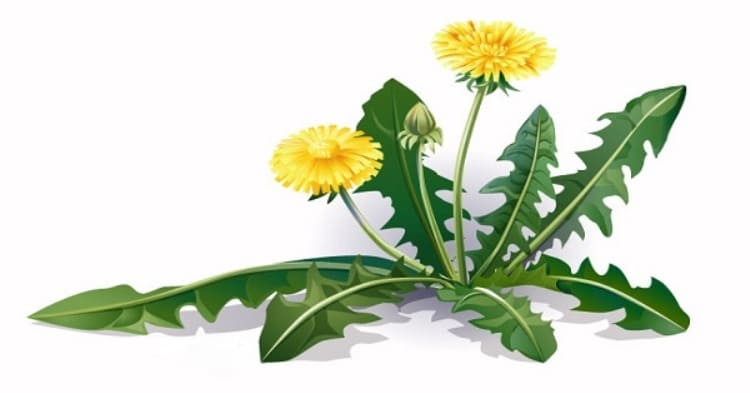 Всего один листик этой травы, которая есть в любом саду, может спасти Вашу жизнь за минуту, но только некоторые люди знают, как использовать его!