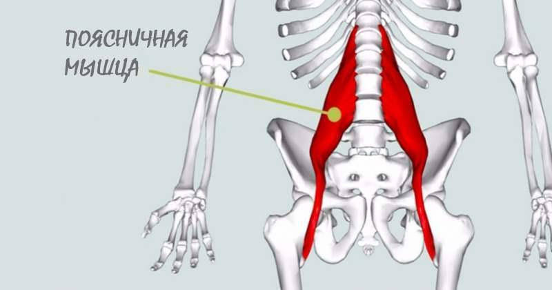 Как невидимая глазу поясничная мышца влияет на всё тело