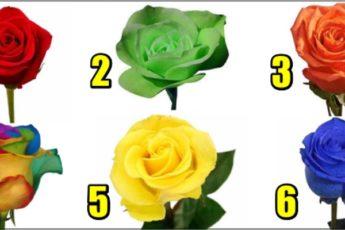 Тест: какая роза вам нравится?