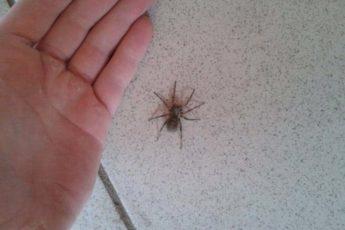 Чего не миновать, если пришлёпнуть паука в доме. О чём предупреждают народные приметы