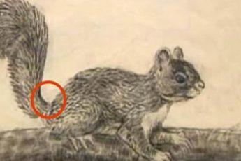 Думаешь, тут нарисована белка? Увеличь картинку. Что это?!